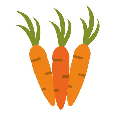 Fresh carrot vegetable icon vector illustration graphic design