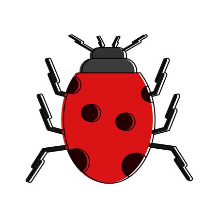 Cute ladybug insect icon vector illustration graphic design Illustration