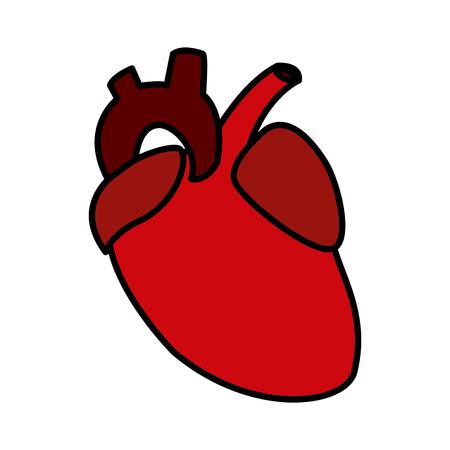 Human heart icon vector illustration graphic design