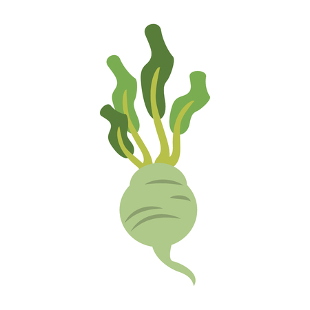 Radish fresh vegetable icon vector illustration graphic design