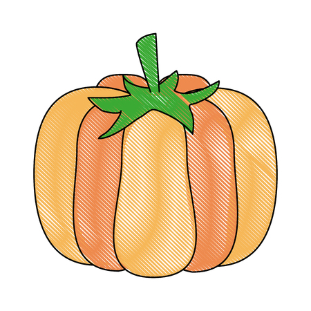 Fresh pumpkin vegetable icon vector illustration graphic design