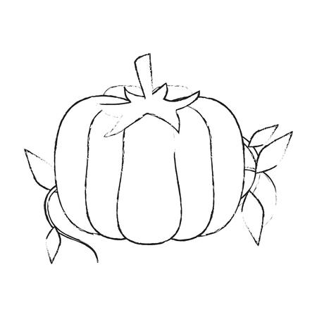 Fresh pumpkin vegetable icon vector illustration graphic design