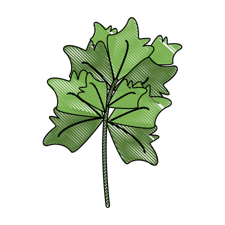 Fresh parsley herb icon vector illustration, graphic design.