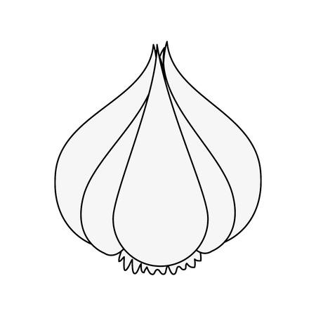 Garlic organic food icon vector illustration graphic design  イラスト・ベクター素材