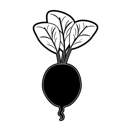 Radish fresh vegetable icon vector illustration graphic design