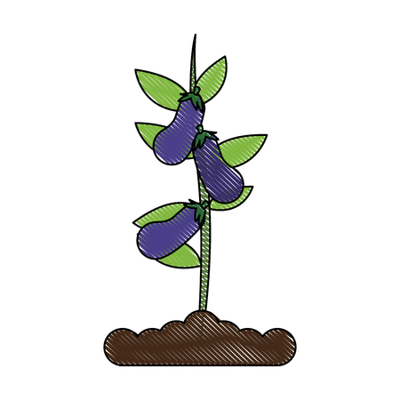 Eggplant plant in vase icon vector illustration graphic design