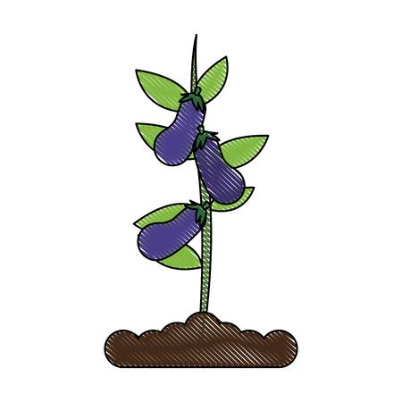 Pianta della melanzana nella progettazione grafica dell'illustrazione di vettore dell'icona del vaso Archivio Fotografico - 91390296