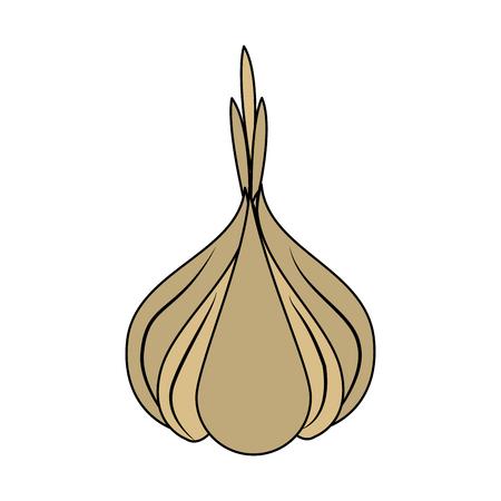 Garlic organic food icon vector illustration graphic design Illustration