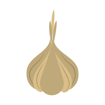 Garlic organic food icon vector illustration graphic design Vettoriali