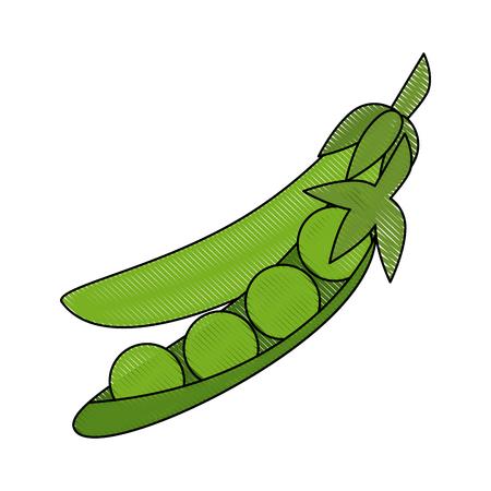 Fresh peas vegetable icon vector illustration graphic design Vettoriali