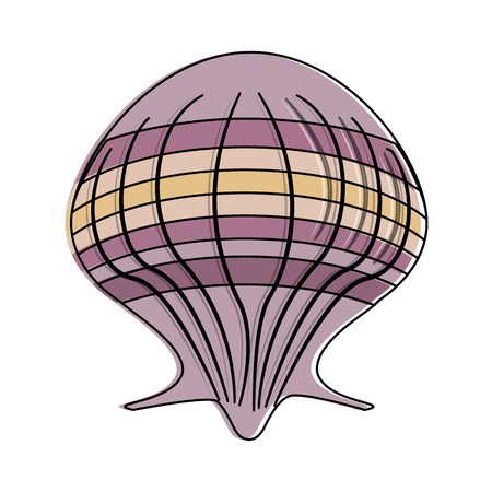 Seashell marine symbol icon vector illustration graphic design