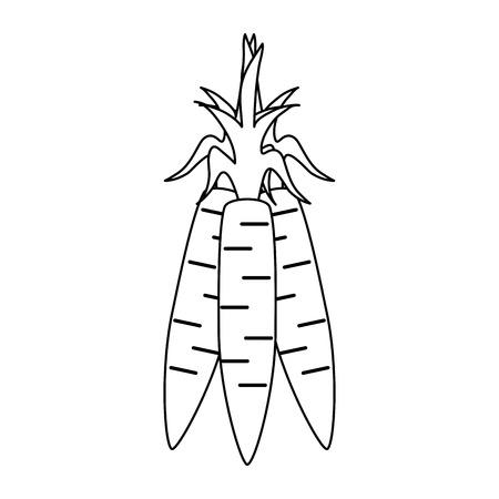 Fresh carrots vegetable icon vector illustration graphic design
