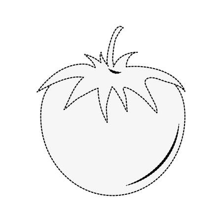Tomato fresh vegetable icon vector illustration graphic design