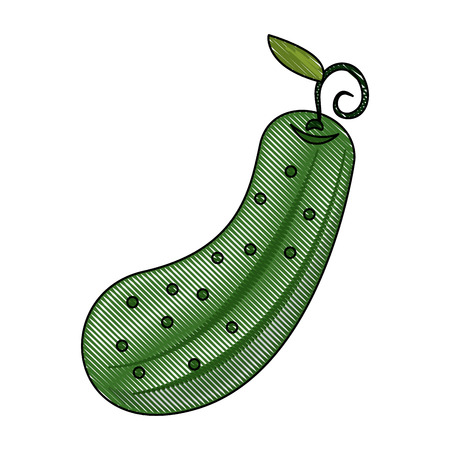 Pickle vegetable isolated icon vector illustration graphic design