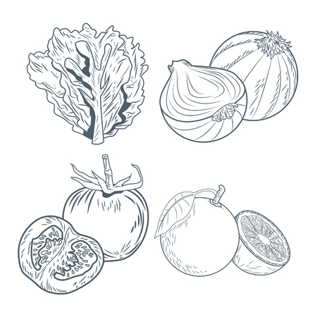 Lettuce onions tomatoes and oranges draw icon vector illustration graphic design Vectores