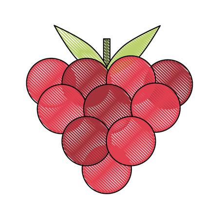 Raspberry fruit isolated icon vector illustration graphic design Illustration