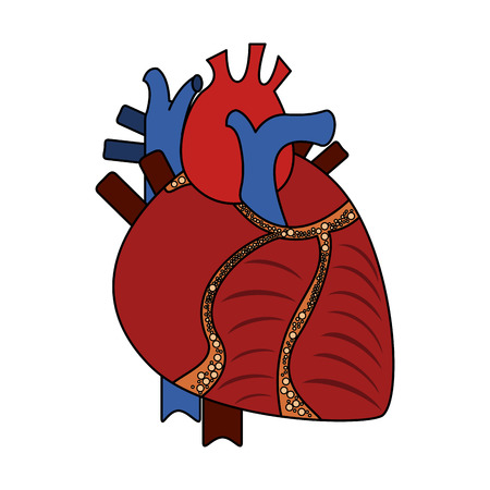 Human heart organ icon vector illustration graphic design