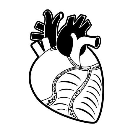 Human heart organ icon vector illustration graphic design.