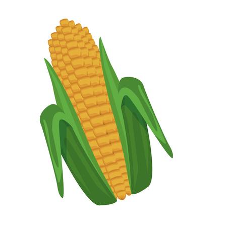 Fresh corn isolated icon vector illustration graphic design Illustration