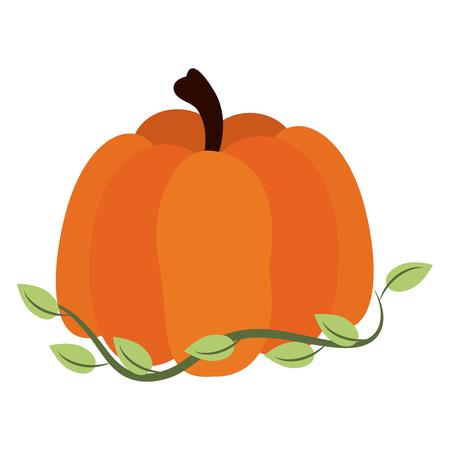 Pumpkin fresh vegetable icon vector illustration graphic design.
