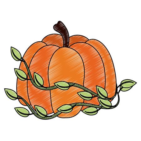 Pumpkin fresh vegetable icon vector illustration graphic design