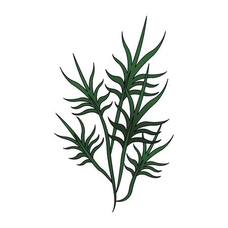 Plant leaves symbol icon vector illustration graphic design