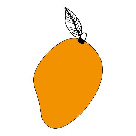 Mango sweet fruit vector illustration graphic design