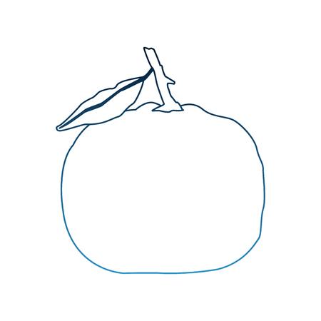 Tangerine citric fruit vector illustration graphic design