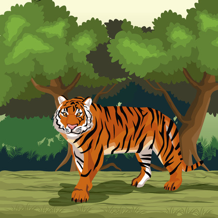 Tiger in the jungle vector illustration graphic design Çizim