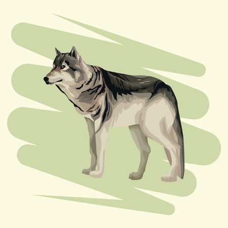 Wolf art drawing vector illustration graphic design