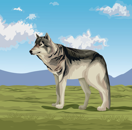 Wolf in the valley vector illustration graphic design