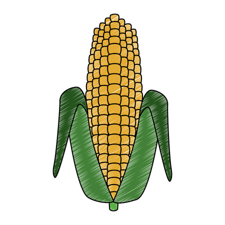 Corn vegetable food vector illustration graphic design Illustration