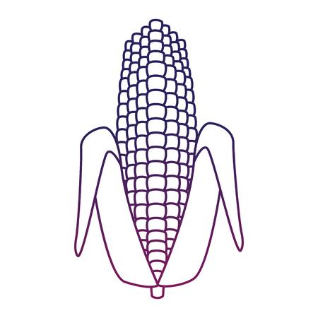 Corn vegetable food vector illustration graphic design Çizim