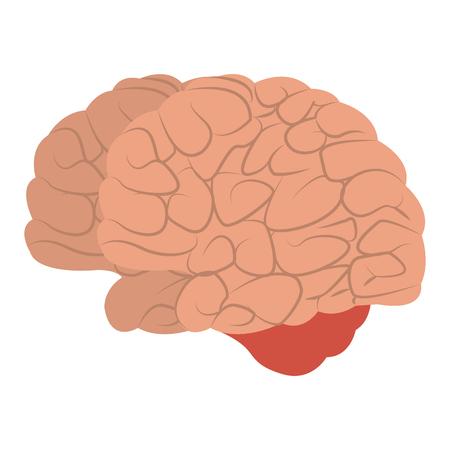 Human brain cartoon vector illustration graphic design