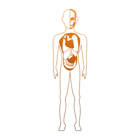 Human body anatomy cartoon vector illustration graphic design Illustration