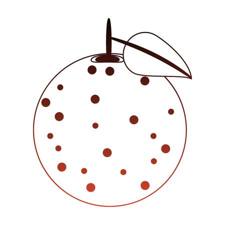 Grapefruit delicious fruit vector illustration graphic design Illustration