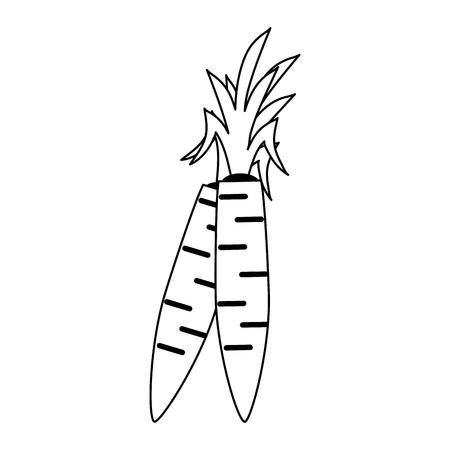 Fresh carrots vegetable vector illustration graphic design