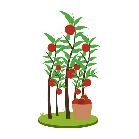 Tomatos plant harvest vector illustration graphic design