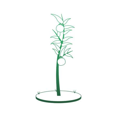 Tomatos plant harvest vector illustration graphic design