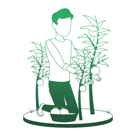 Man with tomato harvest vector illustration graphic design