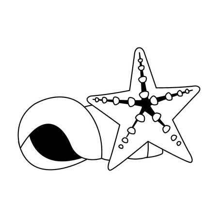 Shell and star sea vector illustration graphic design Illustration