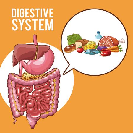 Digestive system human organs vector illustration graphic design
