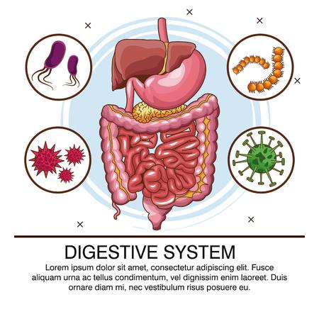 Infografik des Verdauungssystems mit Grafikdesign der Informationsvektorillustration