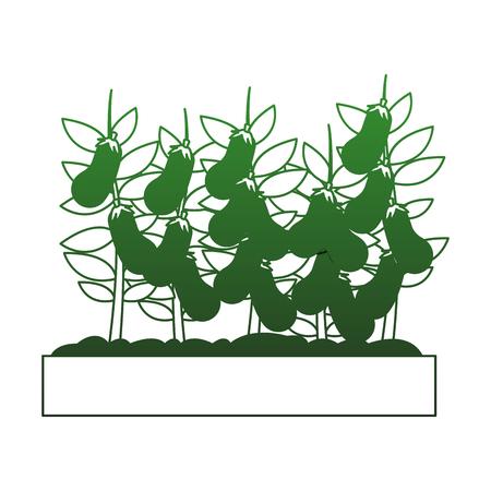 Eggplants harvest cartoon vector illustration graphic design