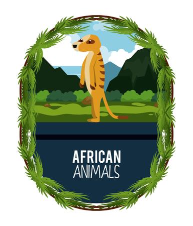 African meerkat animals cartoon vector illustration graphic design