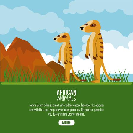 African meerkat animals cartoon poster with information vector illustration graphic design