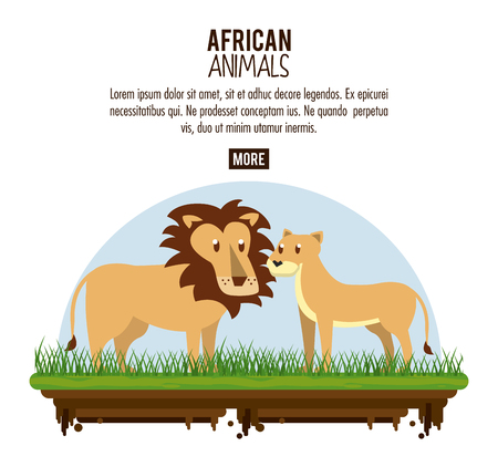 Lion and lioness wild african animals poster with information vector illustration graphic design