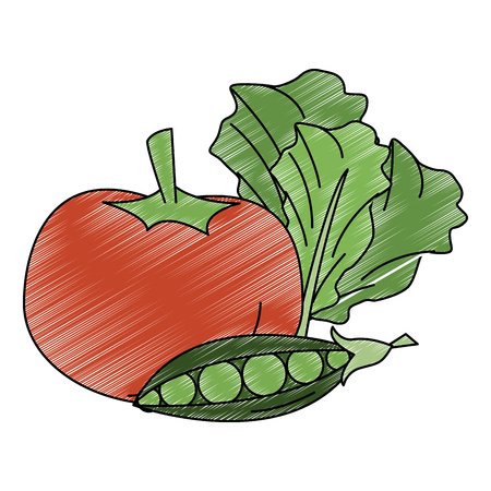 Tomato peas and lettuce fresh and natural vegetables vector illustration graphic design