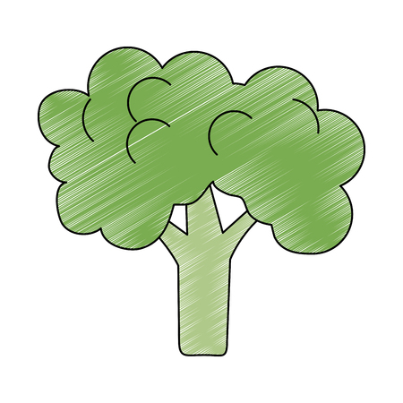 Broccoli fresh and natural vegetable vector illustration graphic design