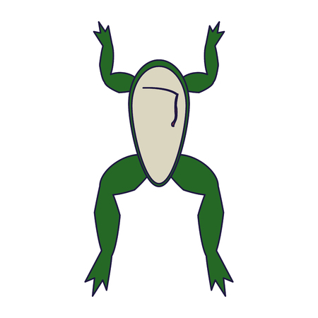 Frog open for experiment isolated vector illustration graphic design